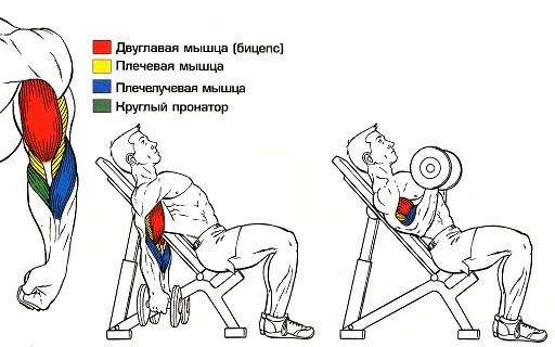 программа упражнений для похудения мужчине
