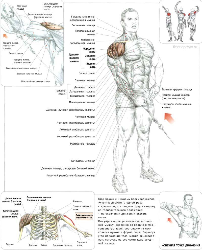 Тренировка плеч своими руками
