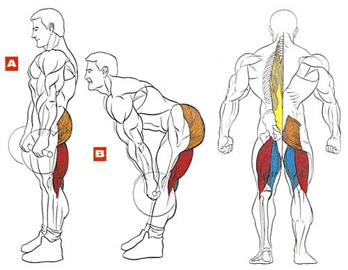 Почему болит спина в лежачем положении
